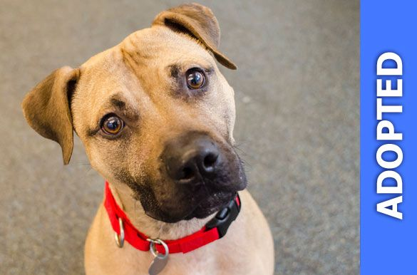 Bradley was adopted!