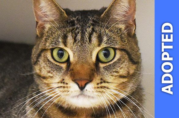 Bronze was adopted!