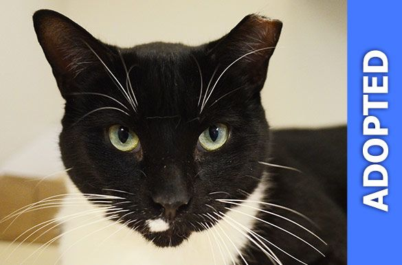 Cadence was adopted!