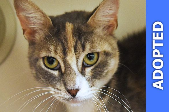 Cassie was adopted!