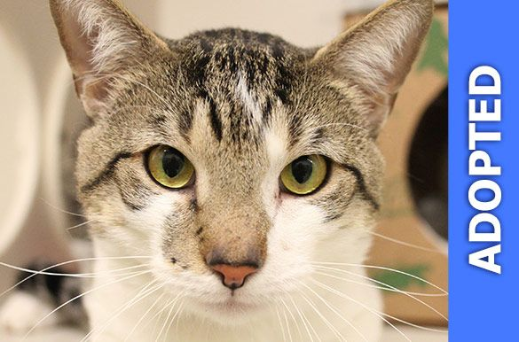 Cassius was adopted!