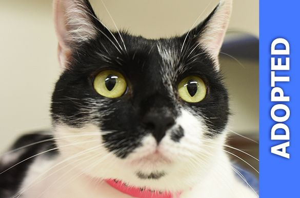 Cate was adopted!