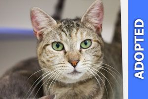 Cathena was adopted!