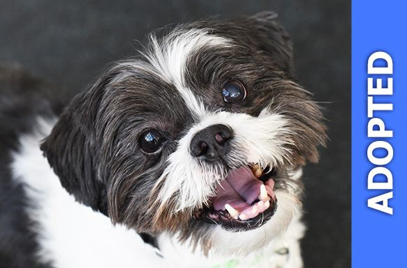Chase was adopted!