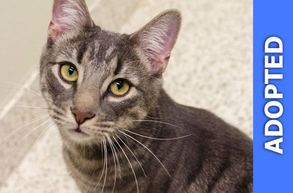 Chaz was adopted!