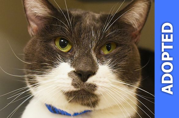 Cheese was adopted!