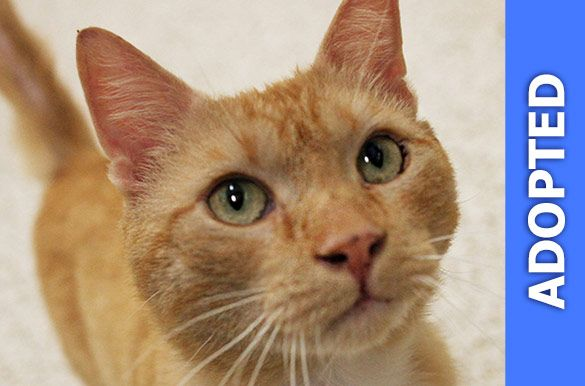 Chester was adopted!