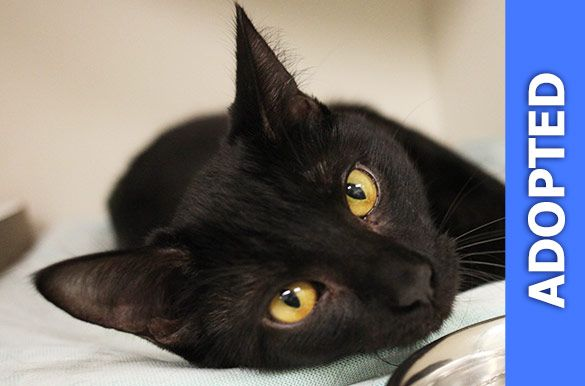 Chili was adopted!