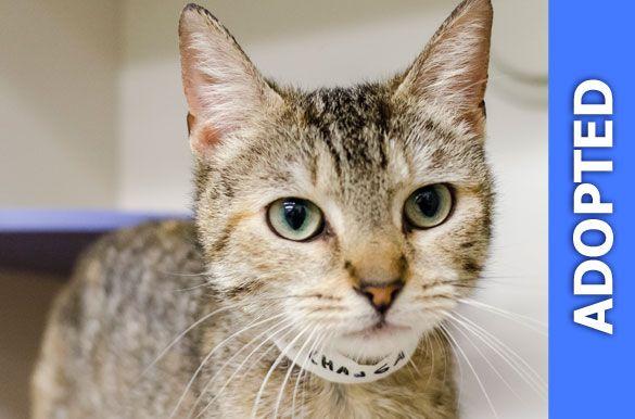 Chimichanga was adopted!