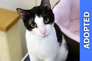 Clint was adopted!