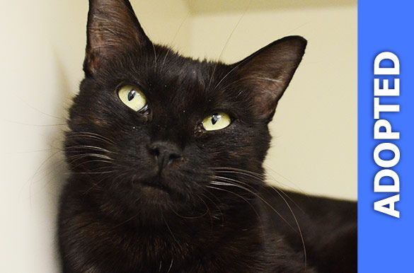 Coffee was adopted!