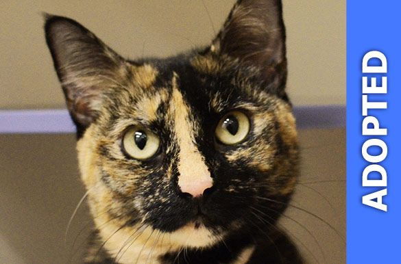 Cosita was adopted!