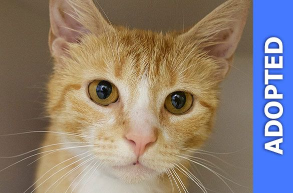 Creamsicle was adopted!