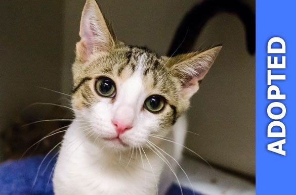 Crumpet was adopted!