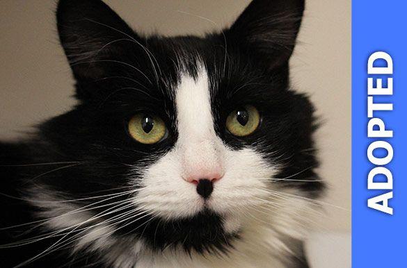 Cusak was adopted!