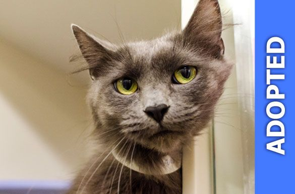 Cynthia was adopted!
