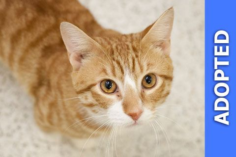 Cyrus was adopted!