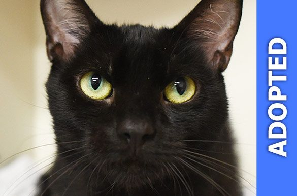 Daenerys was adopted!