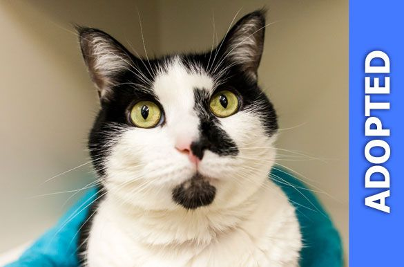 Daffy was adopted!