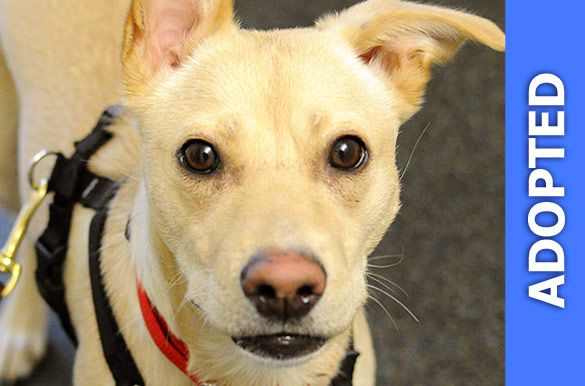 Dalia was adopted!