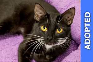 Dipsy was adopted!