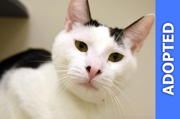 Disco was adopted!