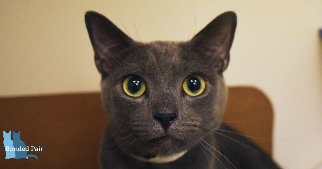 Cat Adoption Centers Nyc