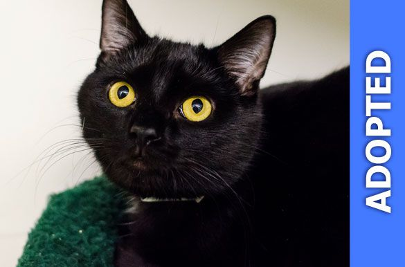 Dwayne was adopted!