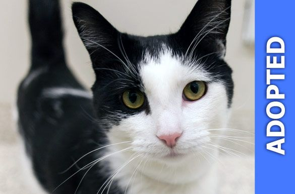 Eli was adopted!