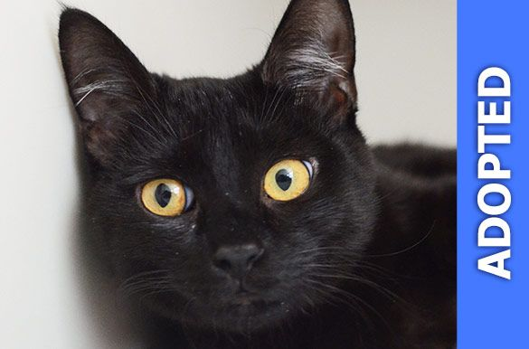 Felicia was adopted!