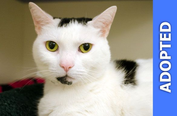 Fila was adopted!