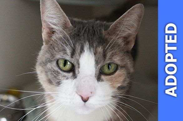 Filakia was adopted!
