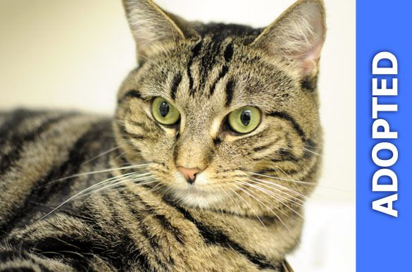 Florid was adopted!