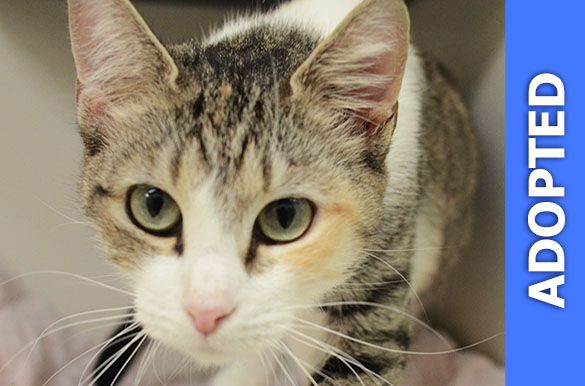 Flower was adopted!