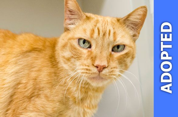 Garfield was adopted!