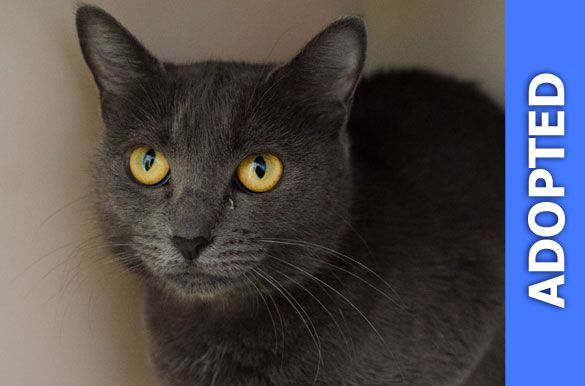 Giggleberry was adopted!