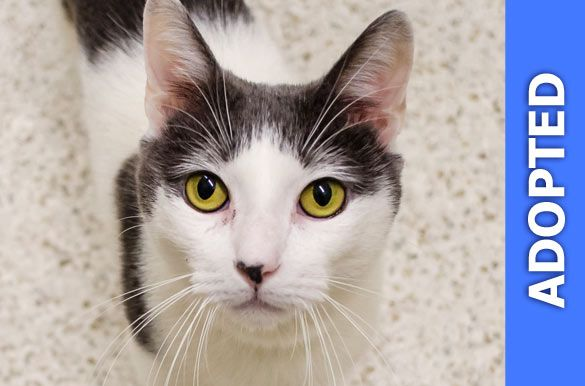 Halo was adopted!