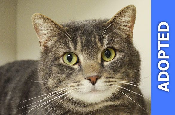 Hershey was adopted!