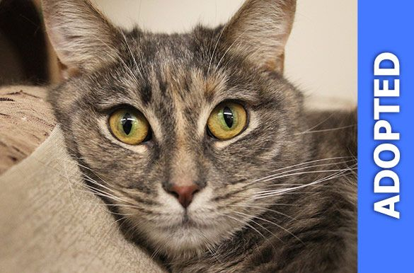 Jade was adopted!