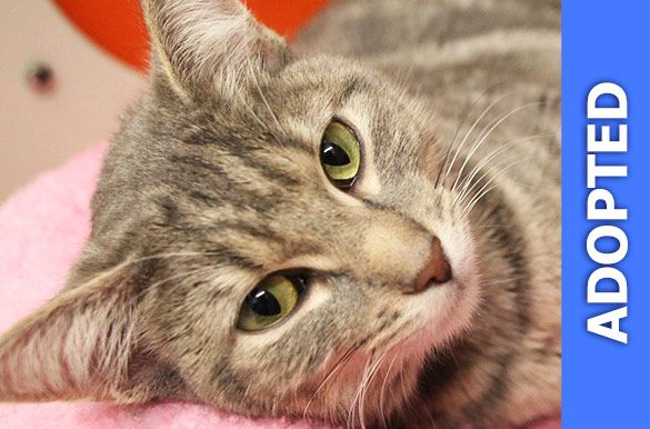 Janice was adopted!