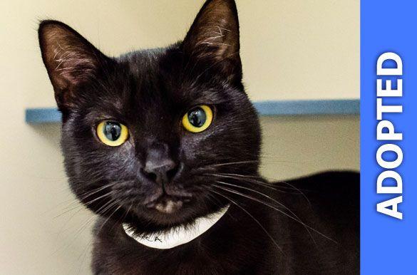 Jasmine was adopted!