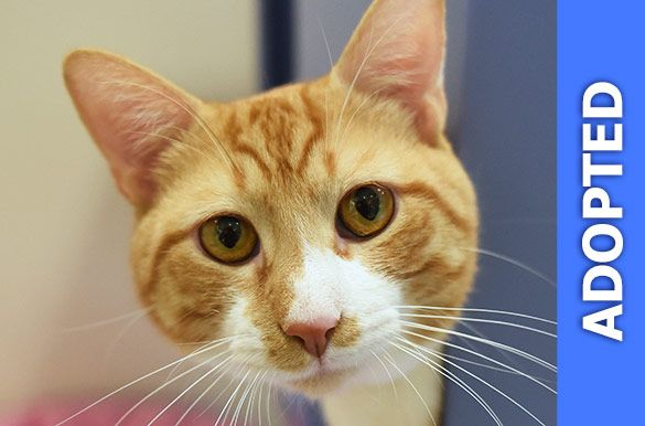 Jefferson was adopted!