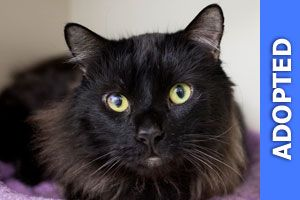 Jeremy was adopted!