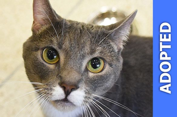 Jo Jo was adopted!