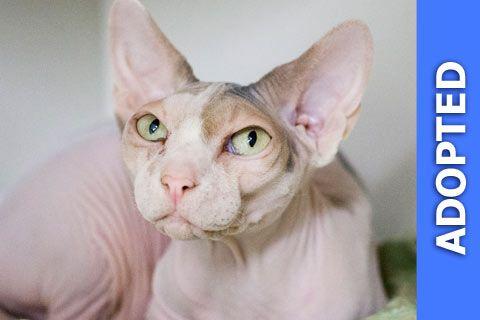 Josefina was adopted!