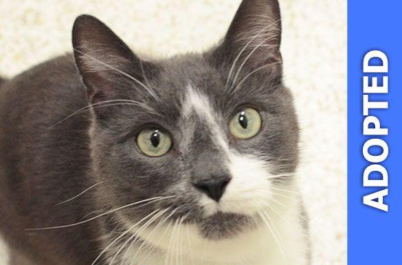 Junie was adopted!