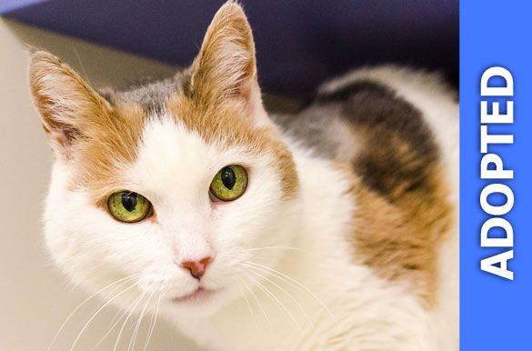 Kassandra  was adopted!