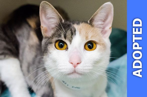 Kat was adopted!