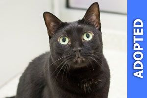 Kenny was adopted!