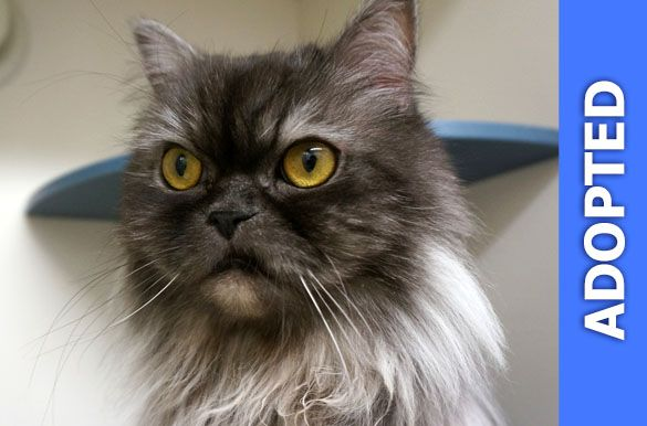King Meow was adopted!